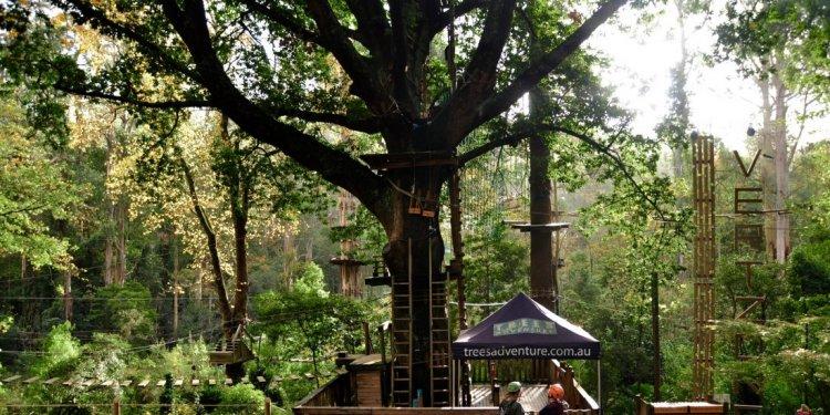 Among the Treetops